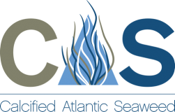 CAS – Calcified Atlantic Seaweed
